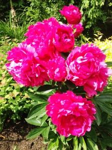 FlowersIMG_0472